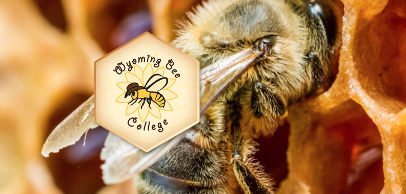 Wyoming Bee College logo in front of bee in hive