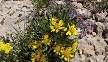 Laramie plant walk, identification workshop May 19