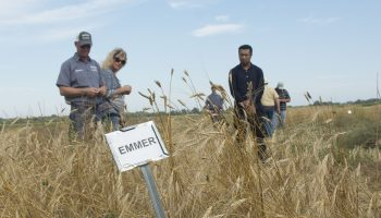 Sessions explore bread making history, use Wyoming-grown first grains for baking