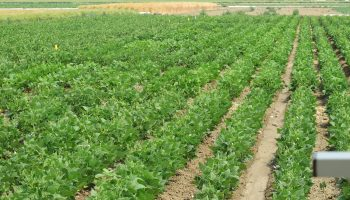 UW's Powell research center field day July 18