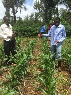 Researchers in a maize field in Kenya.