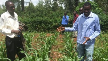 Research collaboration studies whether conservation-based agriculture boosts soil health, sufficient income to small-holder farmers in Sub-Sahara