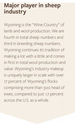 Wyoming is major player in the sheep industry. We are 4th in total sheep numbers and 3rd in breeding sheep numbers.