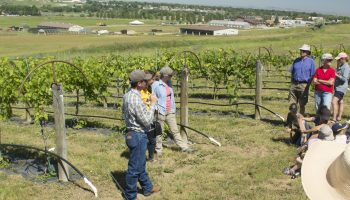 Sheridan research center's workshop highlights growing grapes in Wyoming