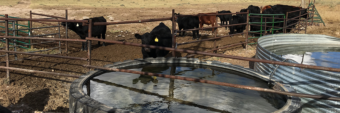 Steers, fences and water tanks