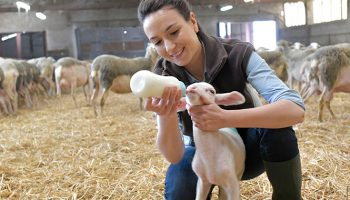 Will Mary Jo or John Doe negotiate a higher price for their lambs?