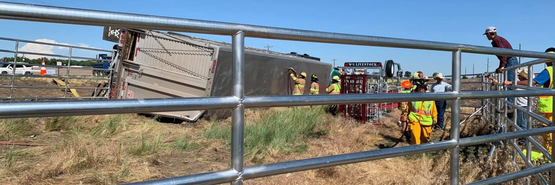 Emergency responders cut a hole in a tipped over livestock truck to allow cattle to safely escape. Scene was surrounded by portable metal corrals.