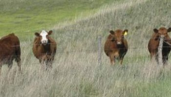 Laramie Research and Extension Center site of beef nutrition, management sessions