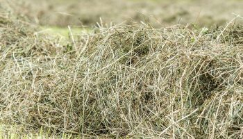 Wyoming Hay and Forage Association hosts winter seminar series on alfalfa pests