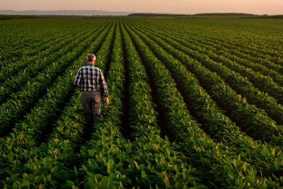Producer wearing checked shirt and brown pants walking through green soybean field.