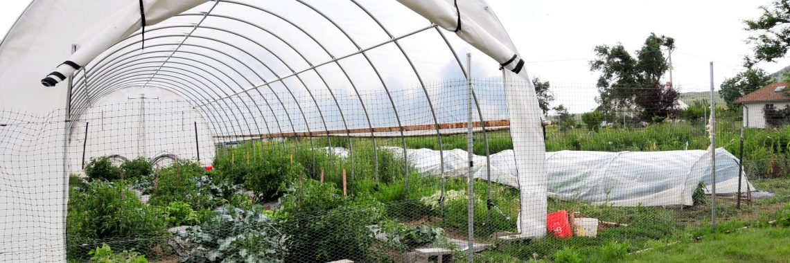 Garden with white plastic high tunnel and white plastic low row cover.