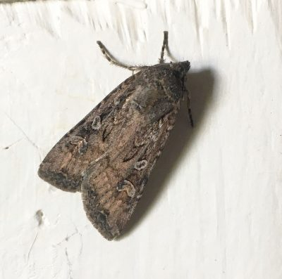 photography of moth