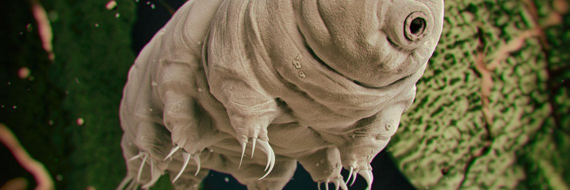Ilustration of a tardigrade