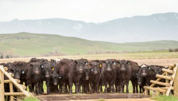 Understanding ranch financial health key factor for successfully managing in challenging times