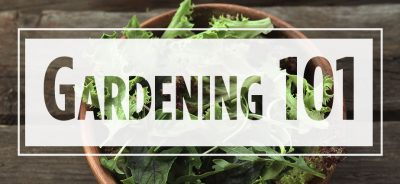 Text Gardening 101 over image of lettuce in brown bowl