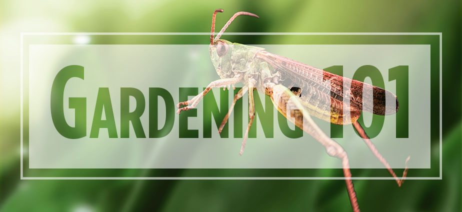 grasshopper jumping with Gardening 101 text overlaid