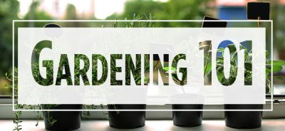 """Text """"Gardening 101"""" over image of potted plants"""