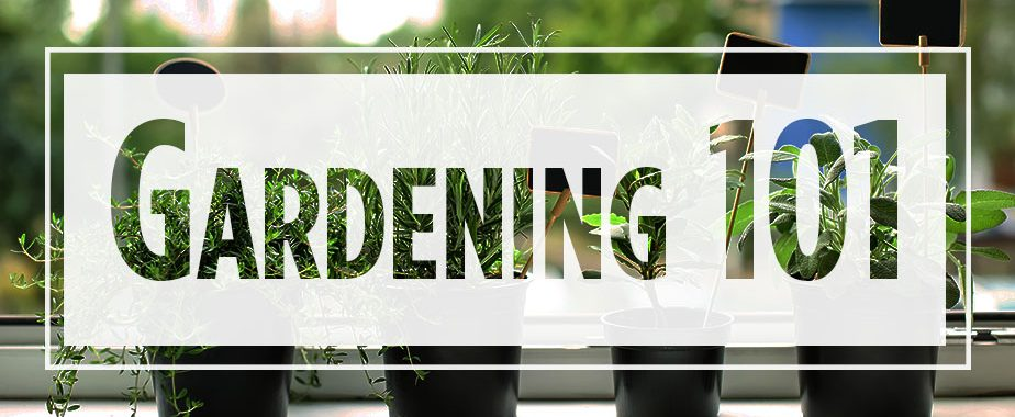 "Text ""Gardening 101"" over image of potted plants"