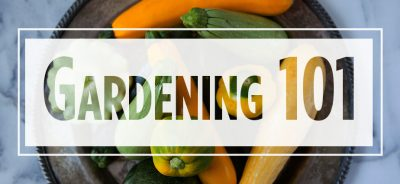 """Text """"Gardening 101"""" over image of various squashes"""