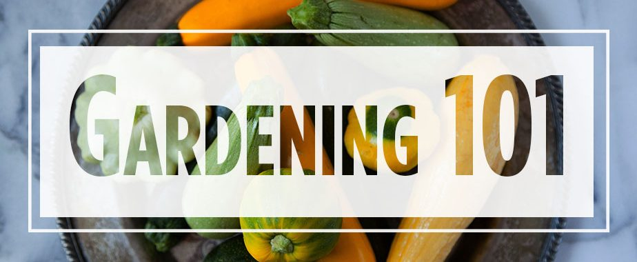 "Text ""Gardening 101"" over image of various squashes"