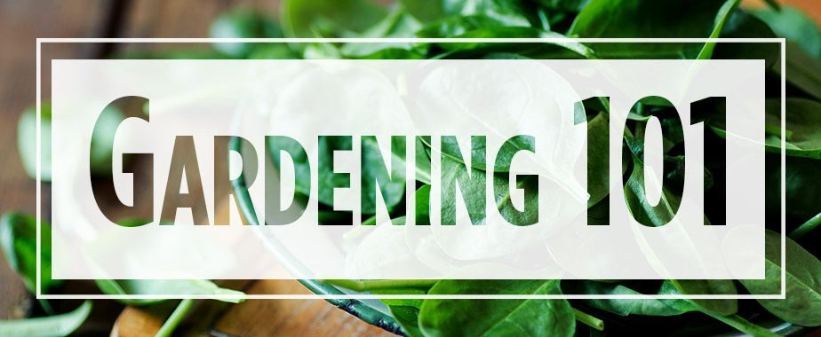 "Text ""Gardening 101"" over image of spinach in a bowl"
