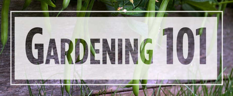 """Text """"Gardening 101"""" over image of growing green beans"""