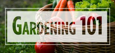 """Text """"Gardening 101"""" over carrots and lettuce in a basket"""