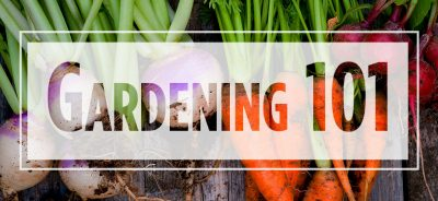 """Text """"Gardening 101"""" over image of whole carrots and turnips"""