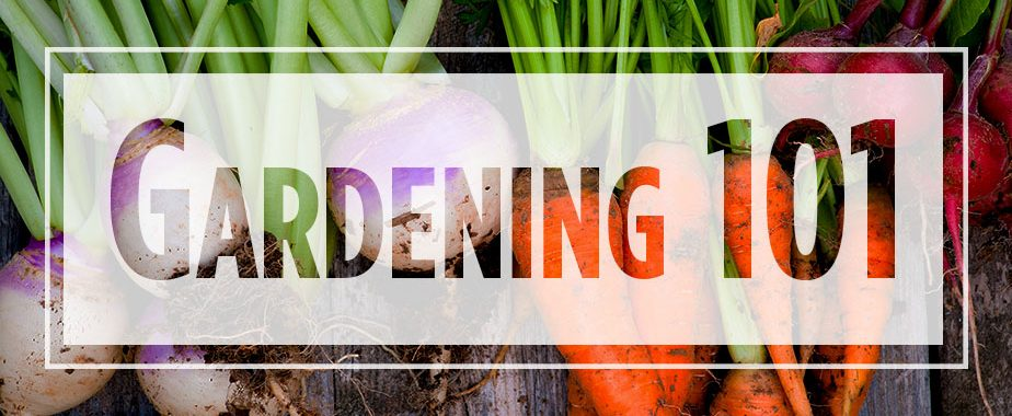 "Text ""Gardening 101"" over image of whole carrots and turnips"