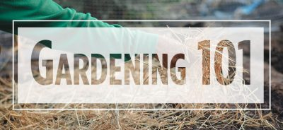 """Text """"Gardening 101"""" over image of arm placing straw"""