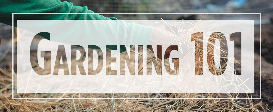 "Text ""Gardening 101"" over image of arm placing straw"