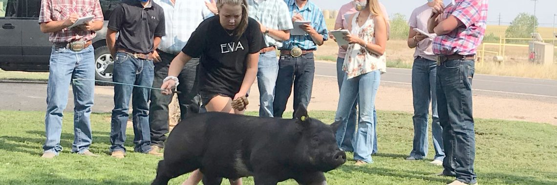 Students looking at pig