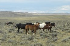 Group of free-roaming horses