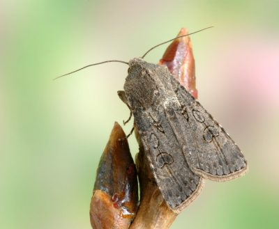 brown moth on plant