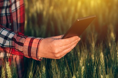 Person in wheat field wearing plaid shirt and holding a phone.