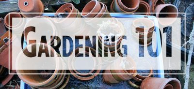 """Text """"Gardening 101"""" over image of stacked terra cotta pots"""