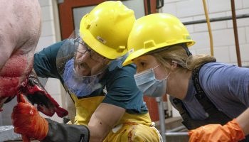 UW college of agriculture students learn hands-on livestock slaughter skills