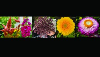Exploring specialty cut flowers for profit in Wyoming