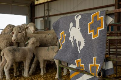 Blanket with sheep at LREC